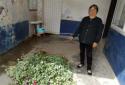 邓州刘集派出所查处一起非法种植罂粟案