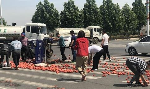 暖心!菜农遇车祸西红柿洒落一地 漯河众市民帮忙捡拾