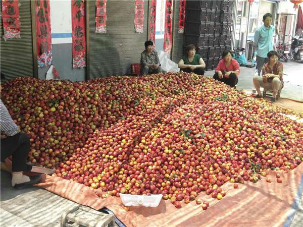 湍东镇清凉庙村林果产业铺就致富路