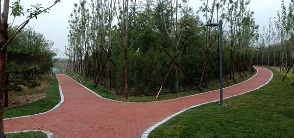 绿城再添新绿!郑州市金水区郑徐高铁沿线生态廊道绿化工程竣工