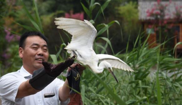 """郑州放飞53只被救护的野生鸟儿 38只有""""身份证"""""""