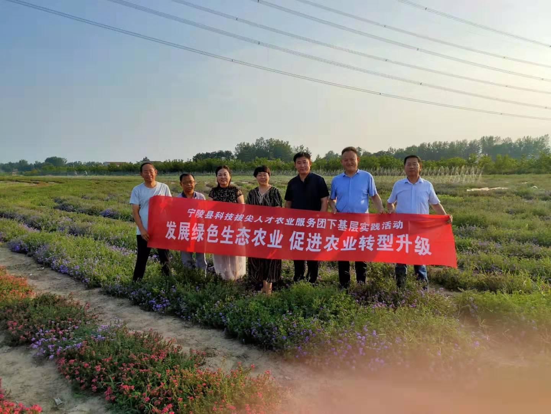 宁陵县科技拔尖人才农业服务团积极开展下基层实践活动