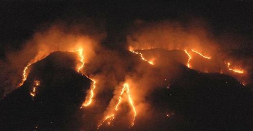 巴西森林火灾数量激增 本月着火点已达36771处