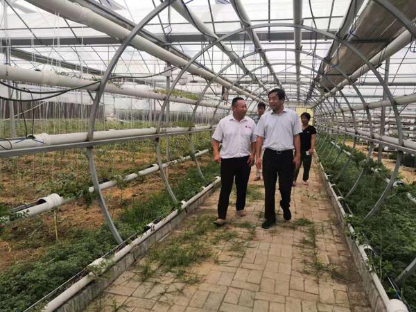 社旗县委书记余广东深入基层调研产业扶贫工作
