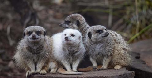 澳大利亚:阿德莱德动物园历史悠久