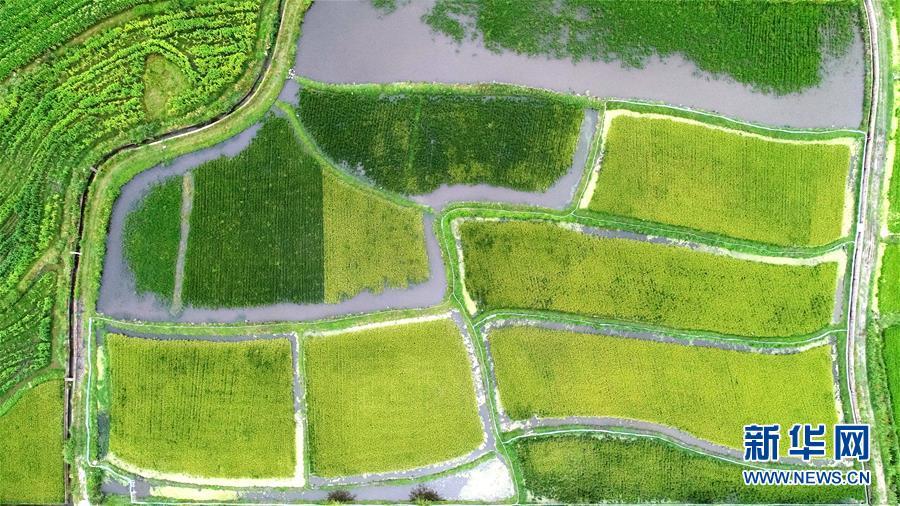 (图文互动)(1)云南洱源:保护生态推进乡村振兴