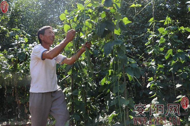 """林州""""百里无人区""""的坚守:播种一片又一片绿色希冀"""