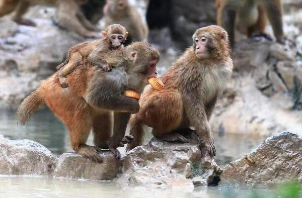 提前过中秋!郑州动物园的萌宠们吃上特制月饼