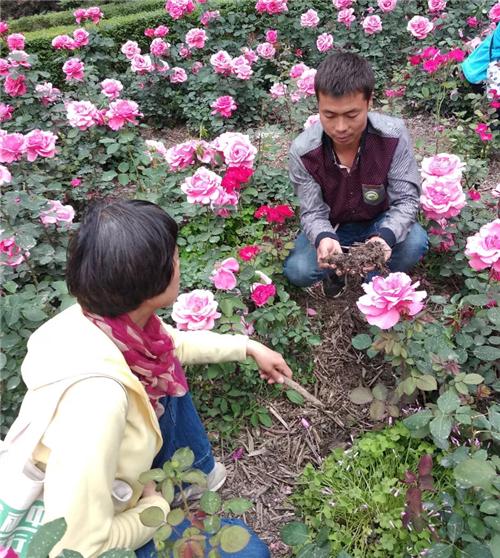 """""""一起堆""""环保公益项目落地郑州"""