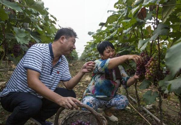 鲁山县:产业促进村集体经济持续壮大