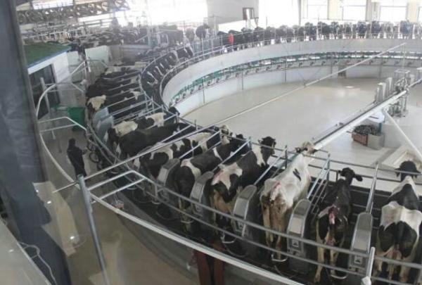 """鲁山: 生态养殖成为群众增收按上""""加速器"""""""