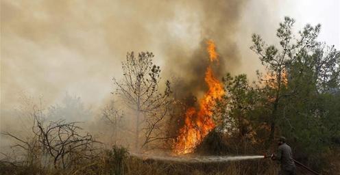 黎巴嫩14日突发山林大火