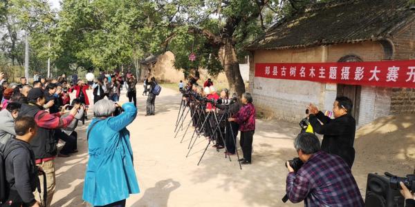 郏县古树名木主题摄影大赛在茨芭镇开镜