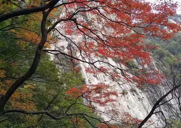 平顶山市金秋旅游产品发布会暨第九届醉美尧山红叶节开幕