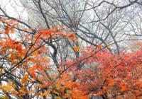 层林尽染、漫山红遍!平顶山:尧山发布多个惠民政策