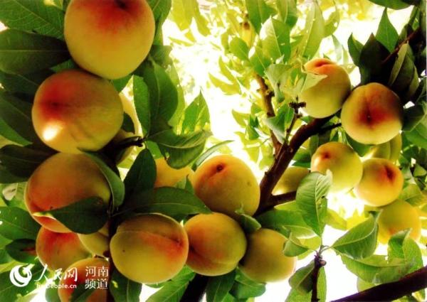鲁山县参加河南省扶贫成果展  签约两个项目