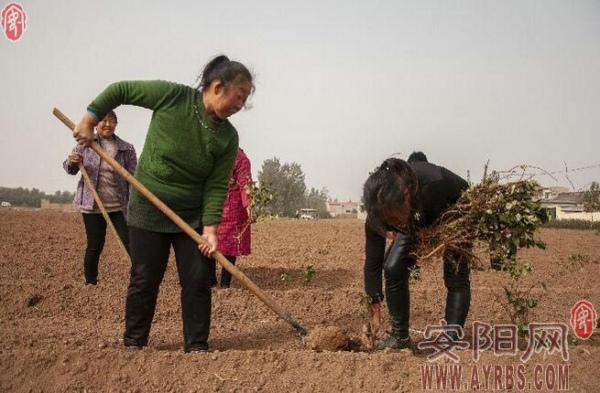 跨村联建 结伴致富——安阳县永和镇发展村集体经济见闻