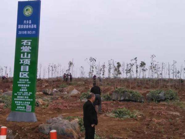 """内乡县岞曲镇:找准""""三点""""快速推进国储林建设"""