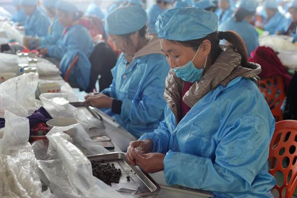宛城区红泥湾镇:产业就业齐发力,贫困户稳定增收有保证