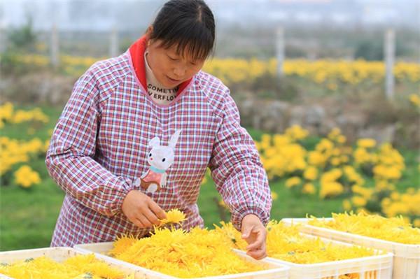 林州茶店镇 大力发展产业扶贫 提升脱贫质量