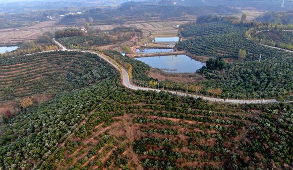 """因地制宜!信阳:发展油茶产业 打造乡村振兴""""新引擎"""""""