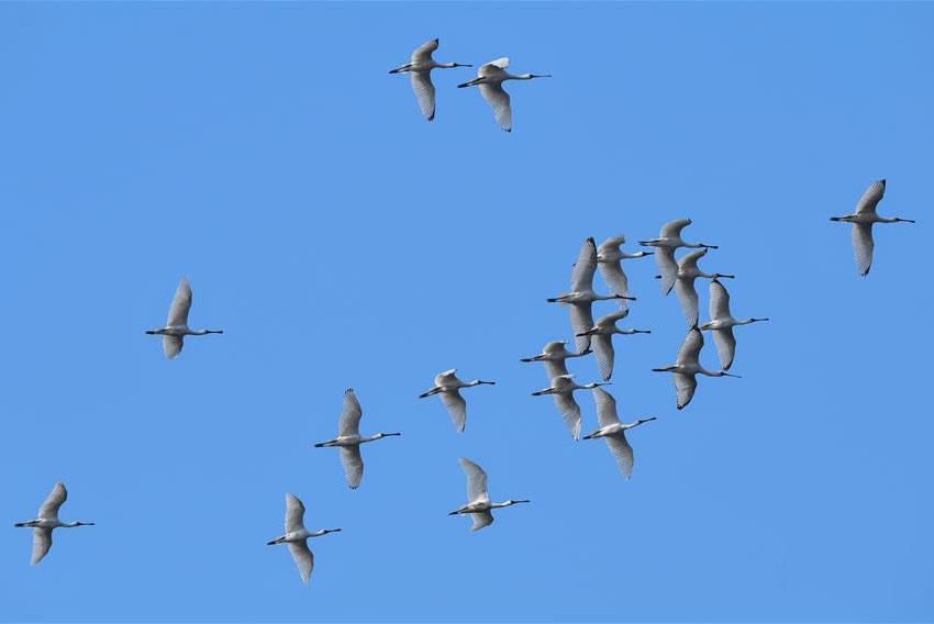 海南:候鸟湿地享暖冬