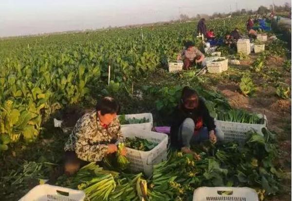 社旗县人大常委会到苗店镇调研产业扶贫工作