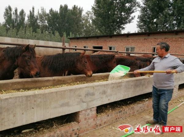 安阳县养马人陶保安的梦想