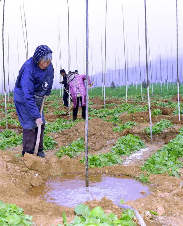 嵩县植树造林添新绿 乡村振兴增活力
