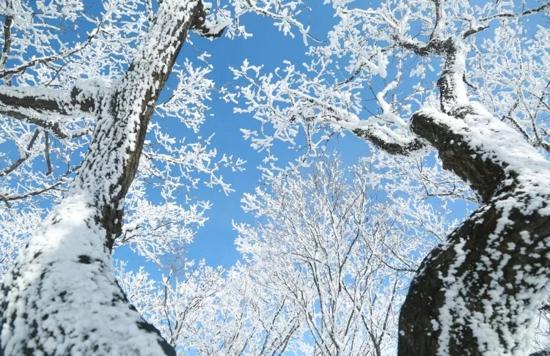 独享无限梦幻天宫,赏雪必到奇境栾川!周末雪晴,相约伏牛山巅!