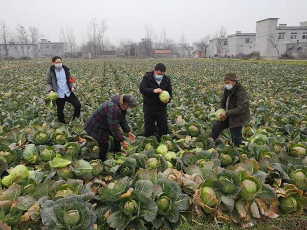 邓州市法院刘毅在防疫中不忘扶贫