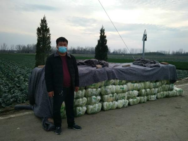 新野县五星镇:一手抓战疫,一手抓蔬菜销售