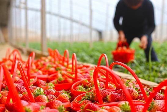河南民权:果农菜农春管忙