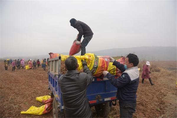 嵩县:立体生态农业成为特色产业发展新引擎