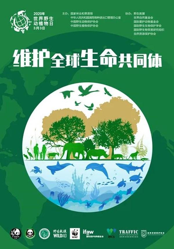 郑州市中原区建设路小学防疫系列课程项目化学习之