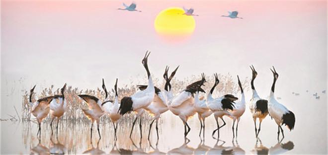 2019年中国自然保护地十件大事揭晓