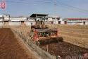 林州市桂林镇打造辣椒种植示范基地