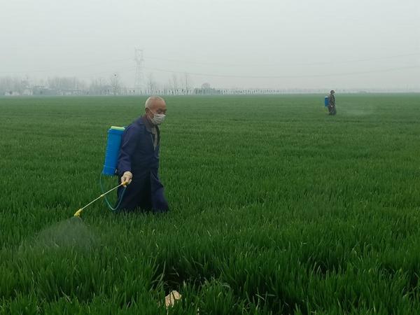 宛城区:春耕防疫两不误 满眼绿色在乡村