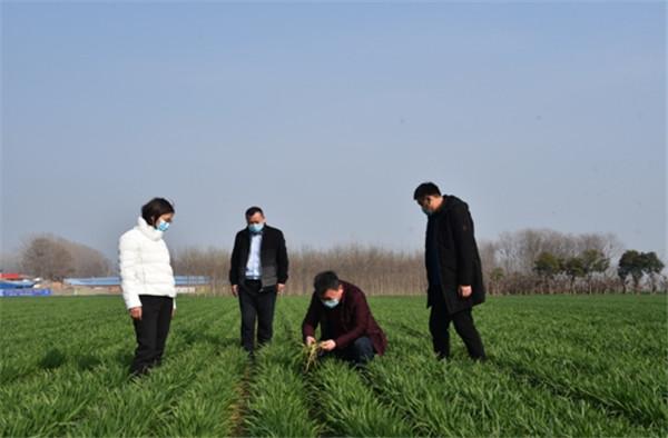 扶沟扛稳粮食安全重任 推动农业农村发展