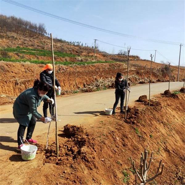 鲁山县仓头乡:环境整治与群众增收双赢