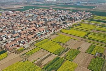 河南温县:色彩斑斓 春意盎然
