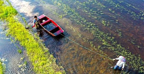 安徽铜陵:稻虾共作 发展绿色有机农业