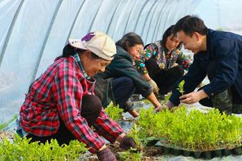 河南光山:春季西瓜种植忙