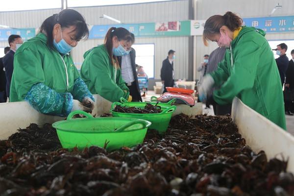 潢川:小龙虾带动扶贫大产业