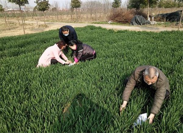 郏县:农技能人显身手,田间服务助增收