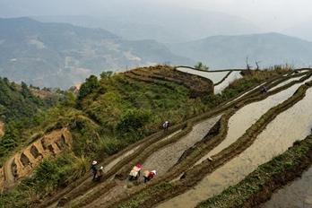 拉祜寨:抢抓农时 加紧插秧