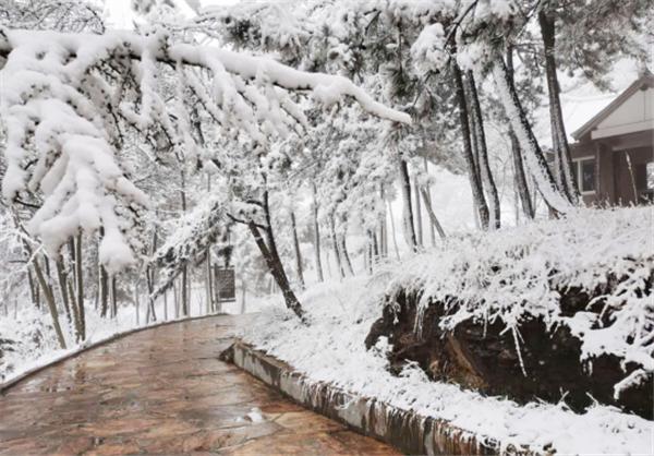 栾川县抱犊寨景区迎来3月下旬少见大雪 为春景增添别样韵味