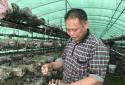 社旗县:创业致富带头人助力产业发展  拓宽贫困群众增收路径