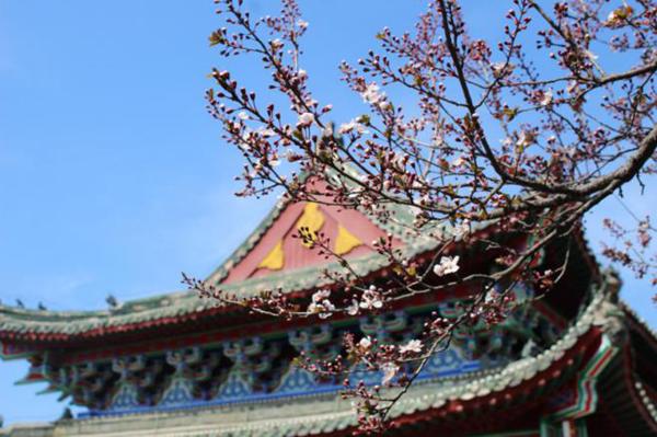 中国(开封)清明文化节:游千年铁塔 览传统文化