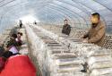 内乡县七里坪乡:壮大香菇产业 巩固脱贫成效